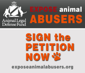 Expose Animal Abusers with Registry